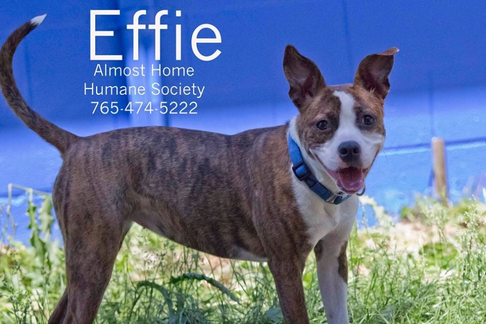 Meet EFFIE...this week's Furry Feature